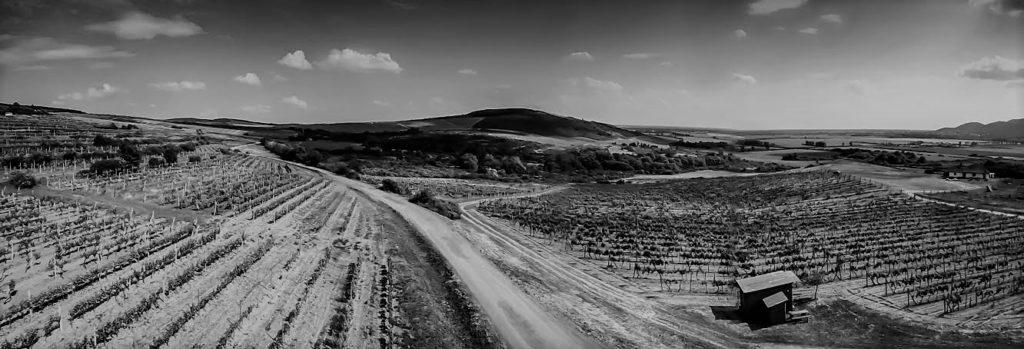 Tokajski vinogradi